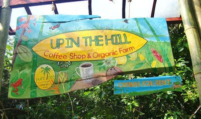 Hand painted sign wih jungle and tropical flowers in Bocas del Toro.